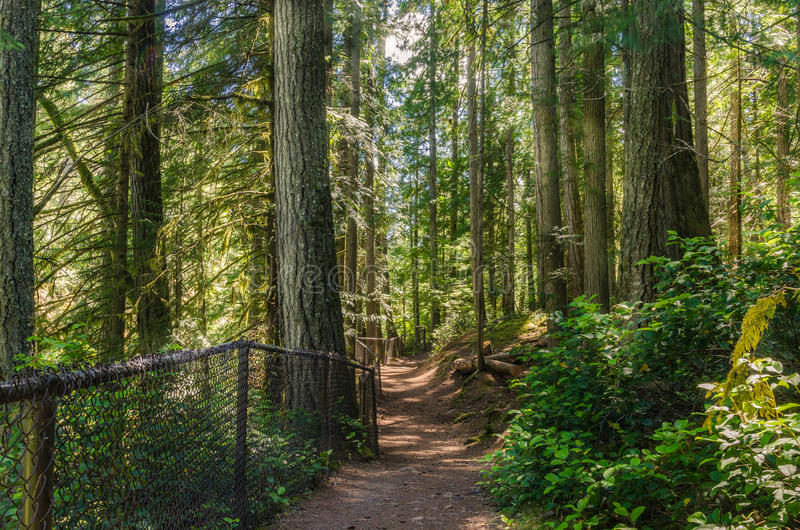 Download Footpath through a Forest stock image. Image of canopy - 46908125