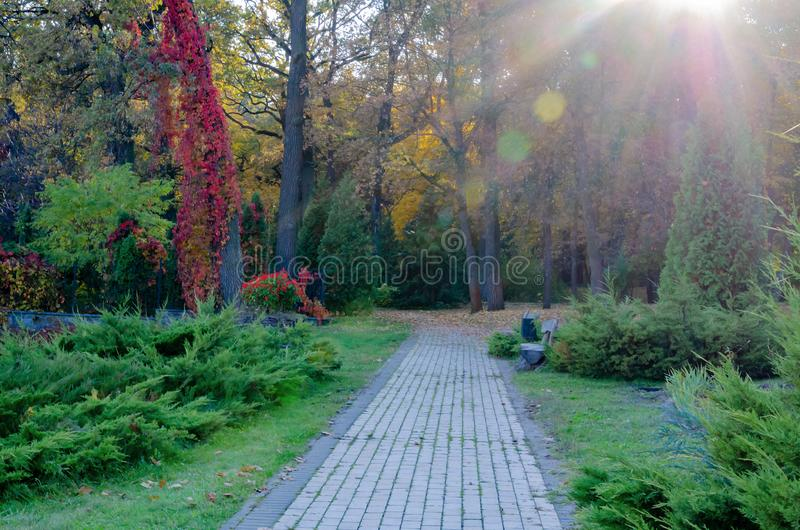 Footpath in the forest, warm autumn day,. Beautiful autumn landscape stock images