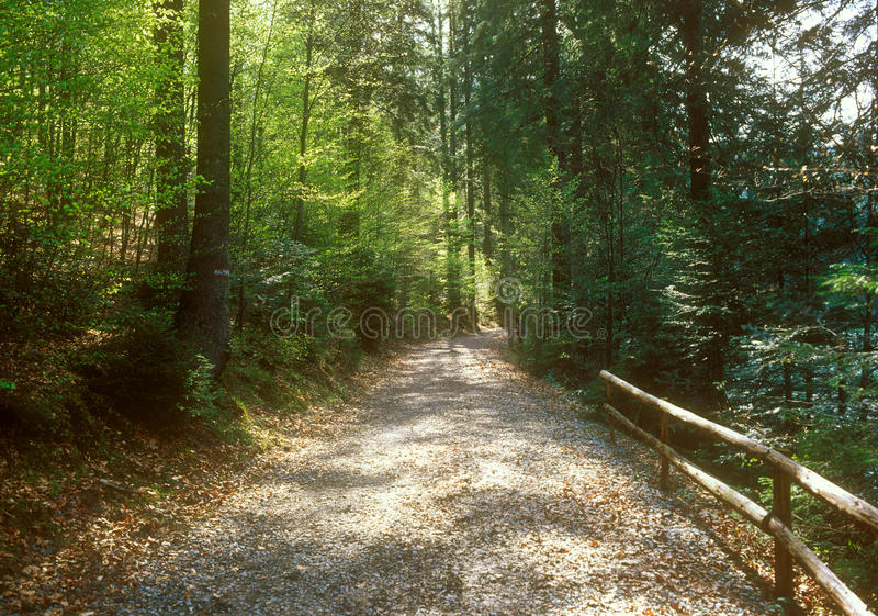 Download Footpath Through The Forest. Stock Photo - Image of meandering, foliage: 32332240