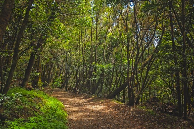 Footpath in Garajonay national park stock photos
