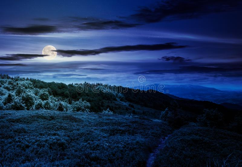 Footpath through grassy mountain meadow at night stock images