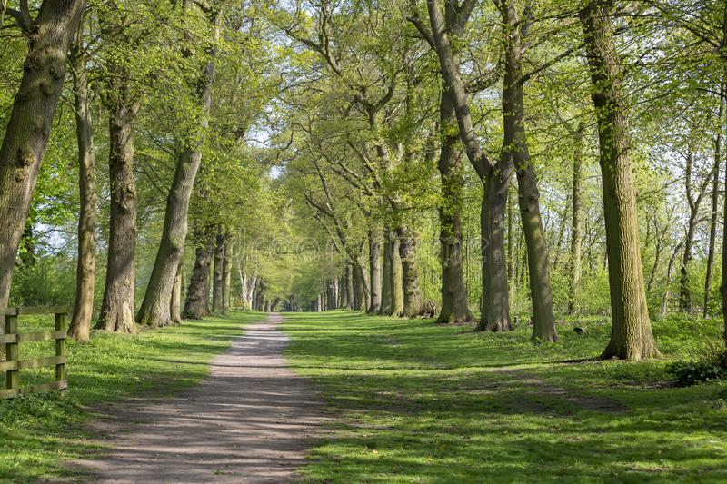 Footpath through Green Forest of Beech Trees in Spring royalty free stock photo