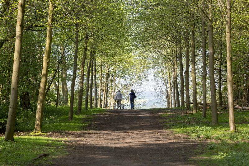 Footpath through Green Forest of Beech Trees in Spring with two people walking dogs in the distance stock photography
