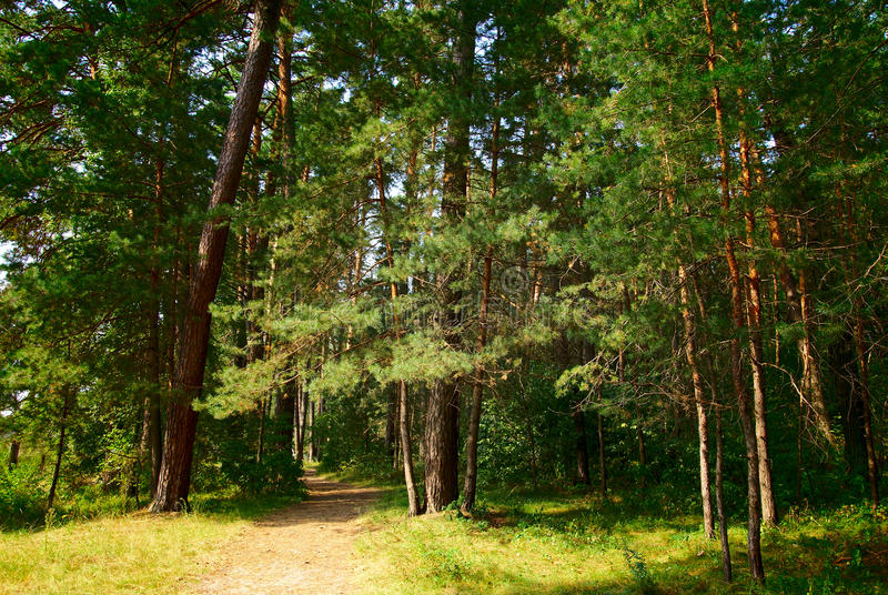 Download Footpath Through A Green Forest With Old Trees Stock Image - Image of leaf, green: 22663953