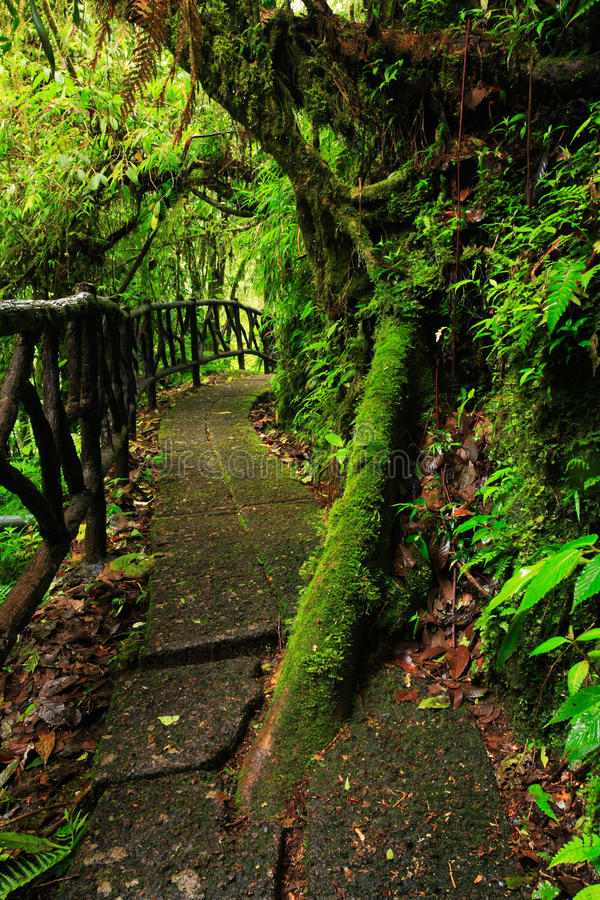 Footpath in green tropic forest. Trail in La Paz Waterfall gardens, with green tropical forest in Costa Rica. Mountain tropic fore. St royalty free stock photos