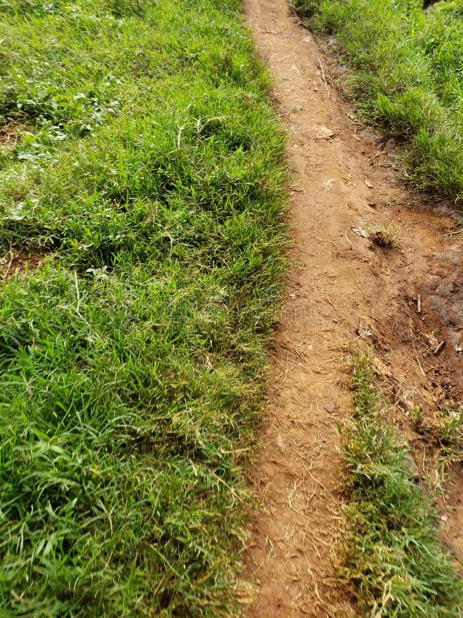 A footpath in the green western Kenya areas stock photography