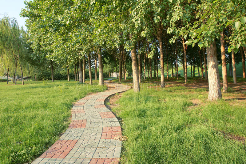 Download Footpath and hurst stock image. Image of wood, tree, footway - 24789023