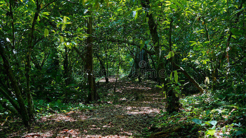 Footpath into the jungle with dense vegetation royalty free stock photography