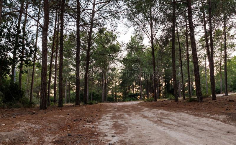 The footpath  leading through the Hanita forest in northern Israel, in the rays of the setting sun. The footpath leading through the Hanita forest in northern stock images