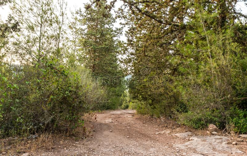The footpath  leading through the Hanita forest in northern Israel, in the rays of the setting sun. The footpath leading through the Hanita forest in northern royalty free stock images