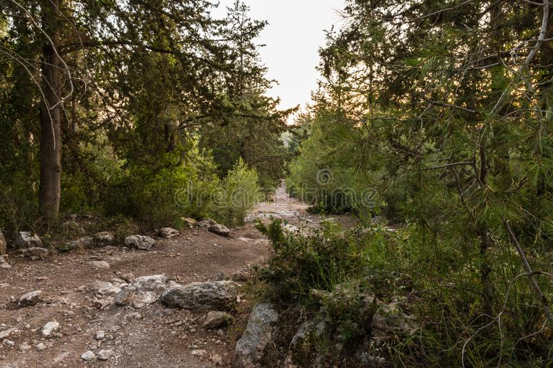 The footpath  leading through the Hanita forest in northern Israel, in the rays of the setting sun. The footpath leading through the Hanita forest in northern stock photography