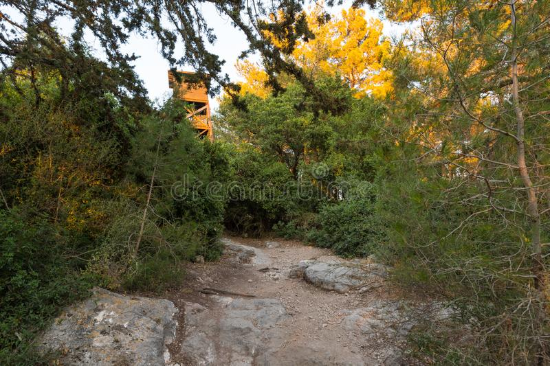 The footpath leading through the Hanita forest and the watchtower since the Israeli Independence War, in northern Israel, in the r. Ays of the setting sun royalty free stock photography