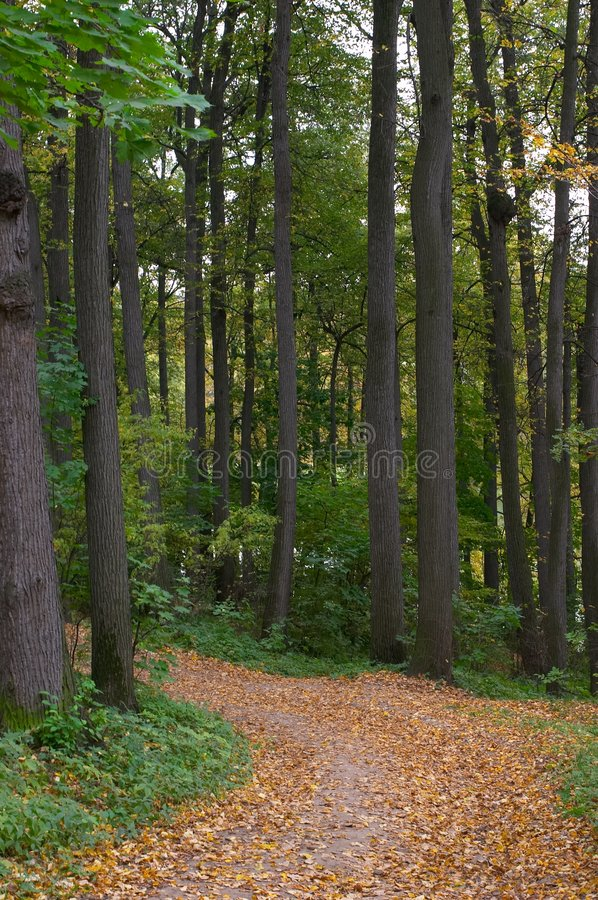 Footpath in a lime wood stock photography