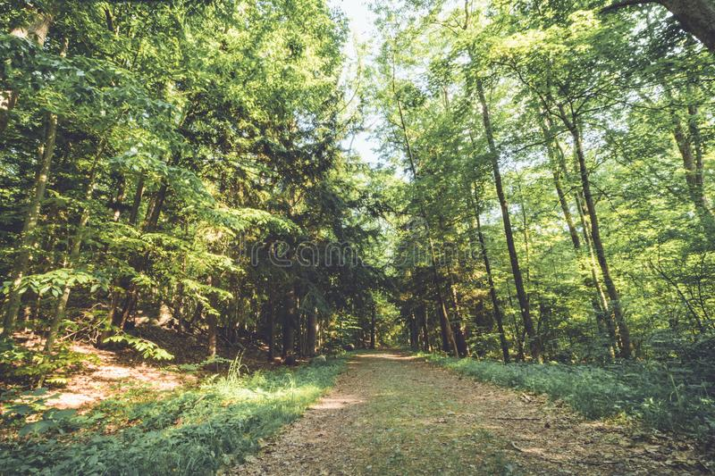 Footpath through lush green forest on a late spring. Afternoon at Ringwood State Park, NJ in vintage setting royalty free stock photography