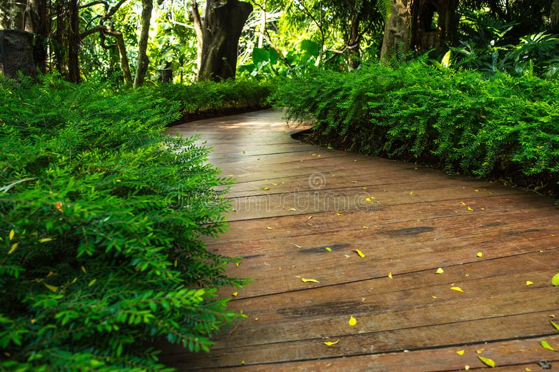 Wooden footpath in the midlle park royalty free stock photography