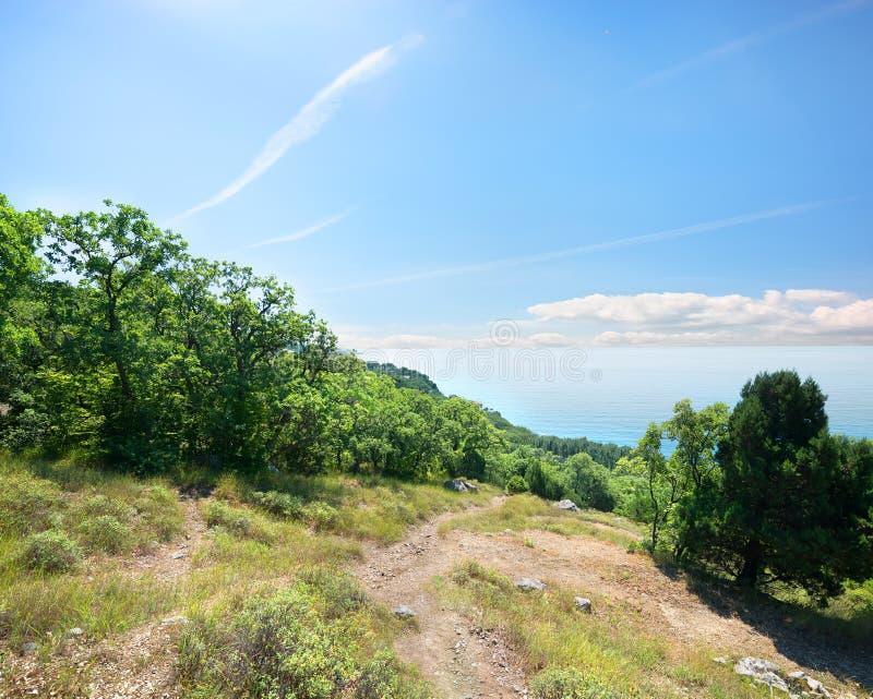 Footpath morze przez lasu zdjęcie royalty free