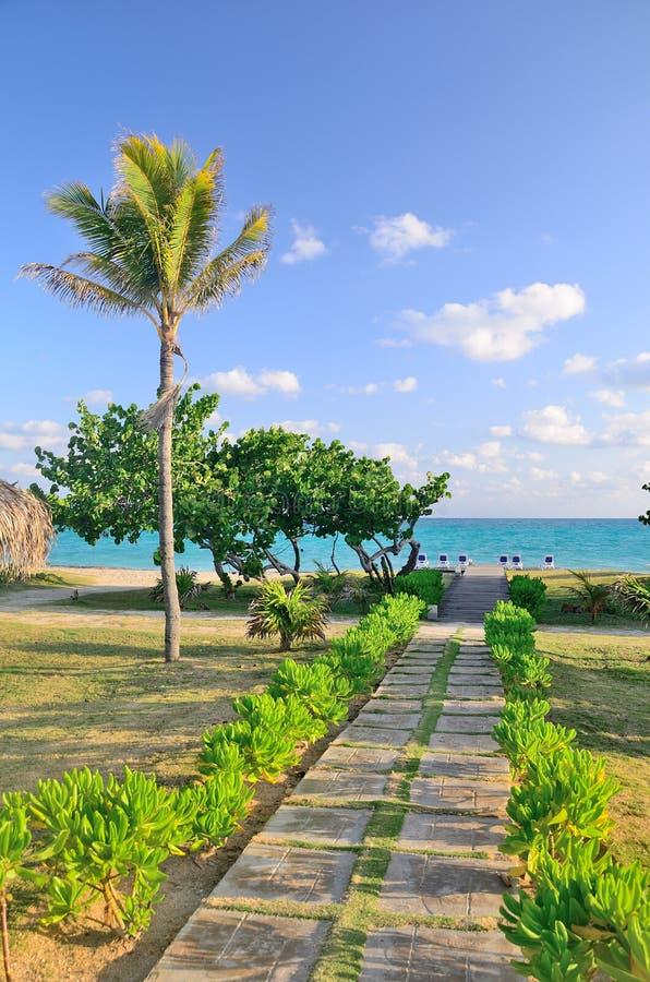 Footpath morze z drzewkami palmowymi obrazy stock