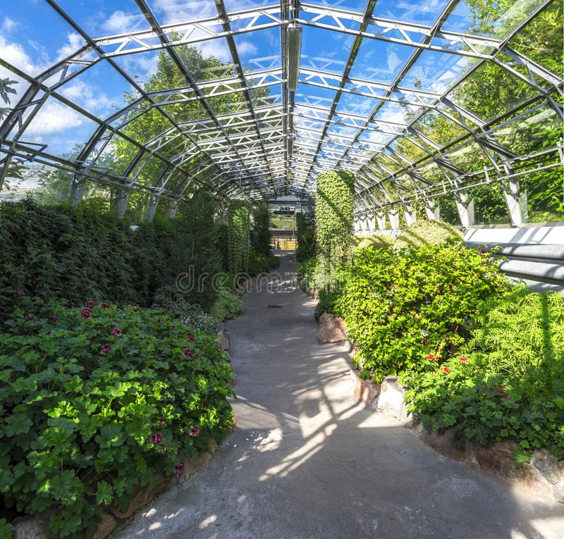 Plants inside of a main hall in David Welch Winter gardens, Duthie Park, Aberdeen. A footpath through one of the halls with flowers and plants in David Welch stock photography