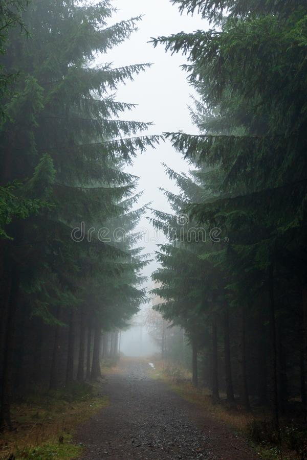Footpath in a pine forest royalty free stock photos