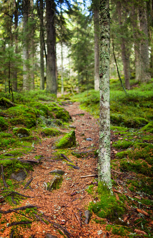 Footpath Through A Pine Forest Stock Photo