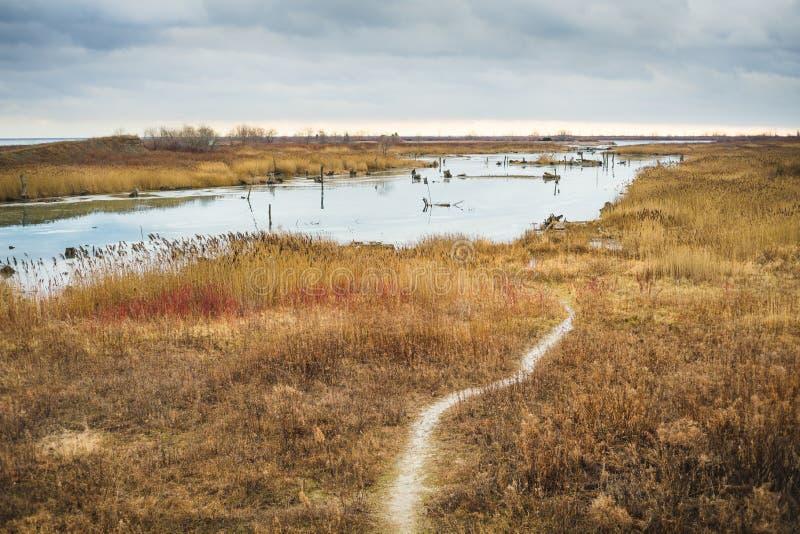 Footpath przez bagna natury prezerwy obraz stock