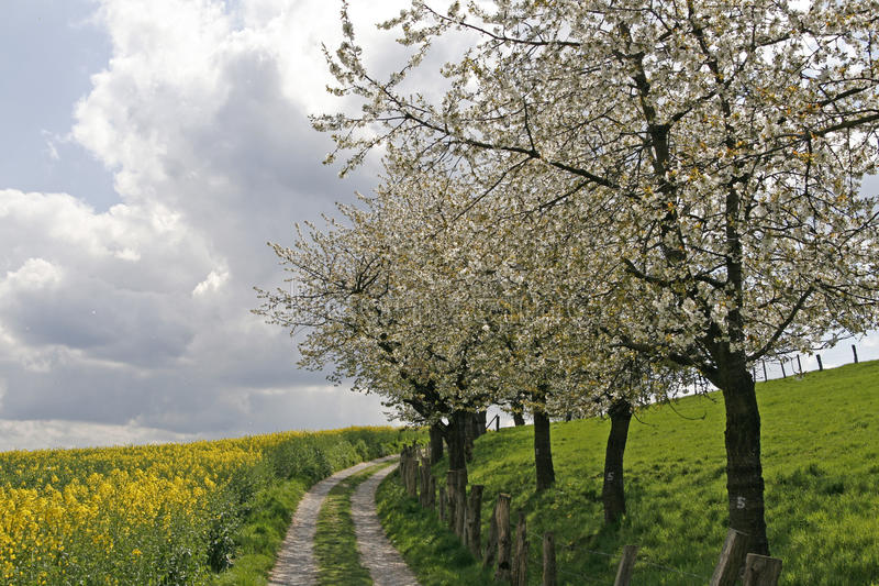 Download Footpath With Field, Germany Stock Image - Image: 11830361