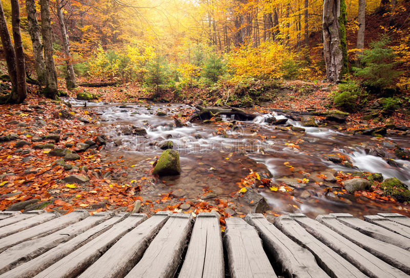 Footpath and river in autumn colors forest stock images
