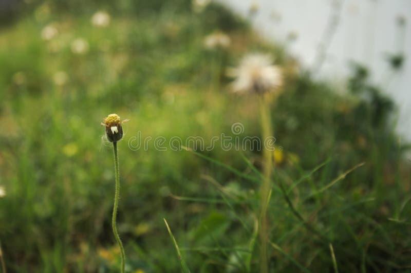 Footpath strony kwiat obraz royalty free