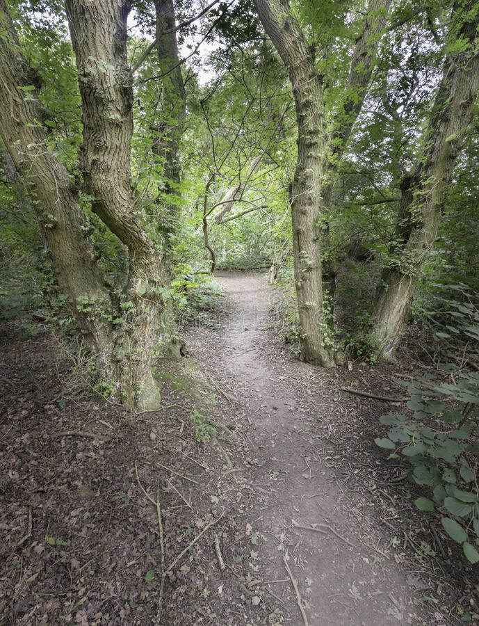 Footpath through the forest in Eastern England stock photography