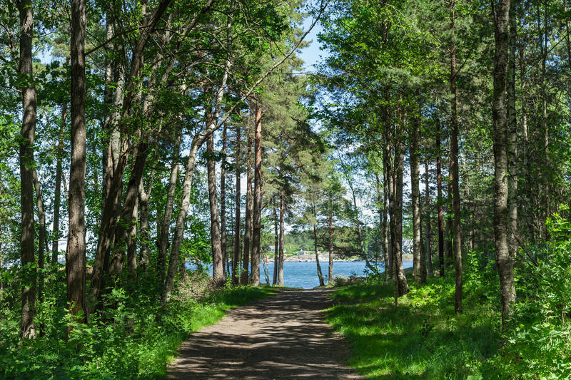 Footpath between trees in green dark forest and sea stock photos