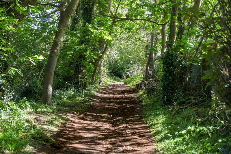 Footpath through a tunnel of trees imagem de stock royalty free
