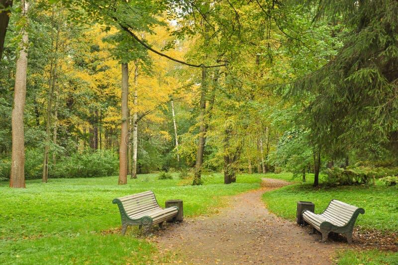 Footpath w jesień parku wśród drzew między dwa pustymi ławkami zdjęcia royalty free