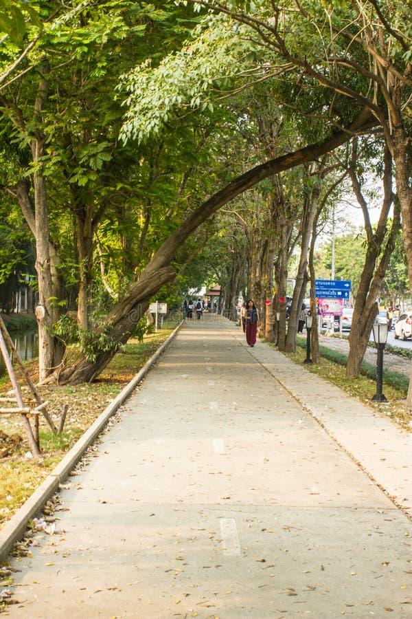 Footpath z drzewami i trawą zdjęcia royalty free