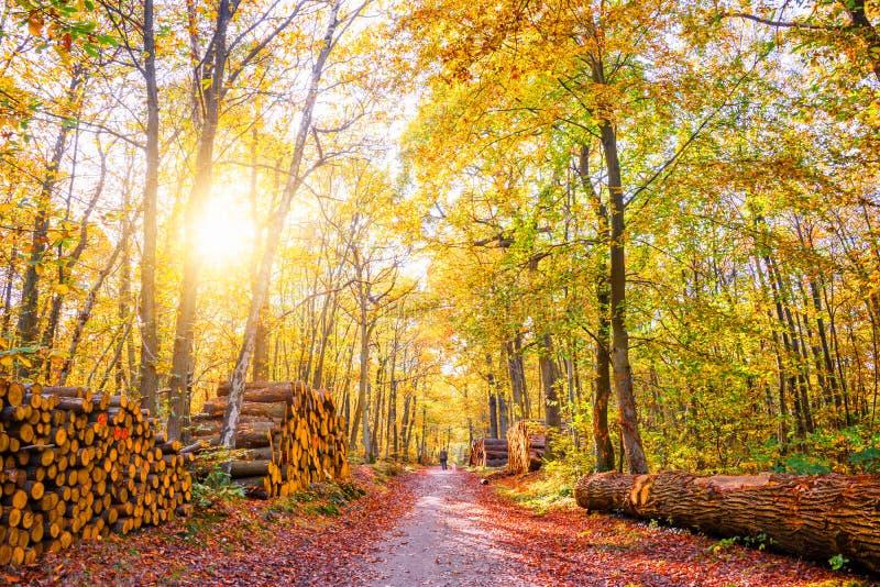 Footpath z stosami drewno notuje dalej las obraz stock