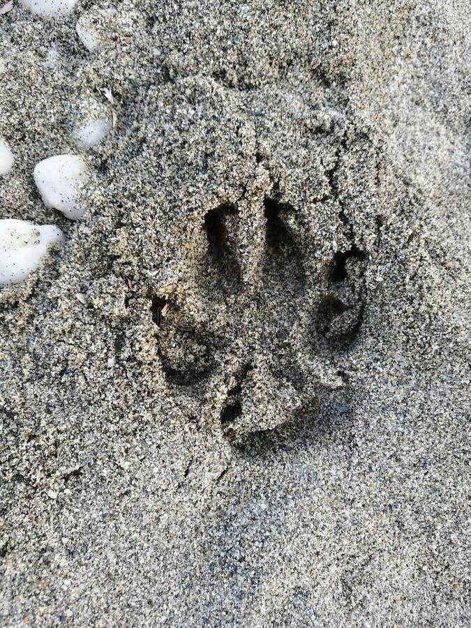 footprint fotografia royalty free