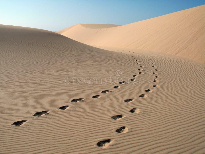 Footprint. S in the dunes - Brazil