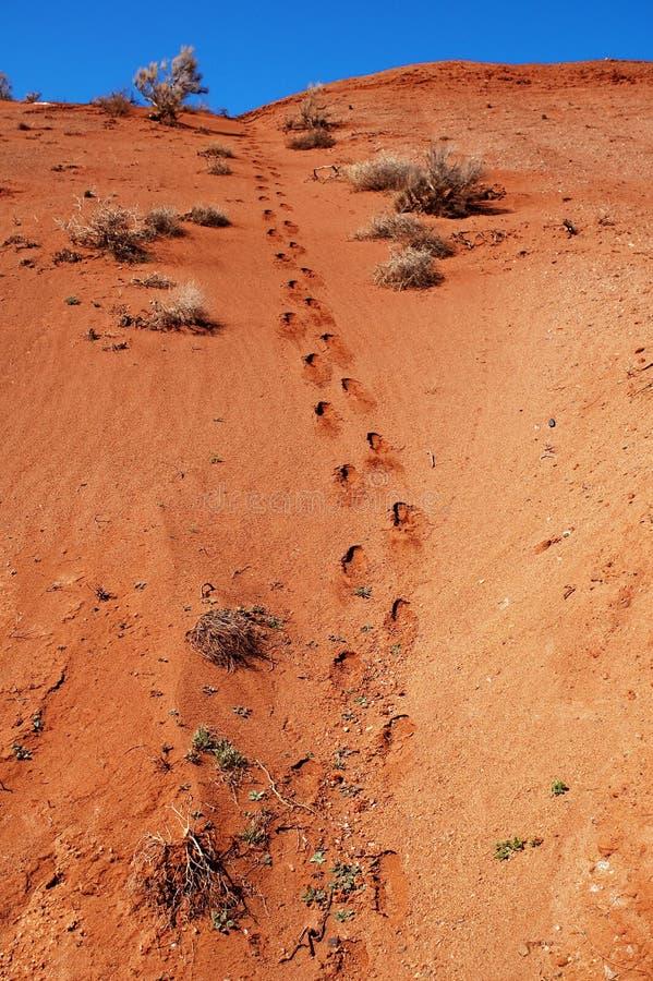 Footprint in desert. Footprint in red desert and blue sky royalty free stock photos