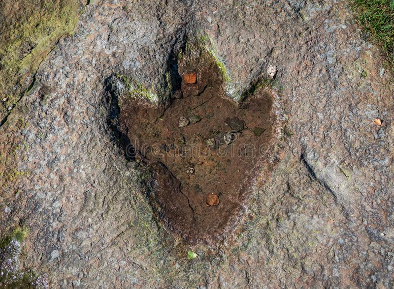 The footprint of dinosaur on a rock.  royalty free stock images