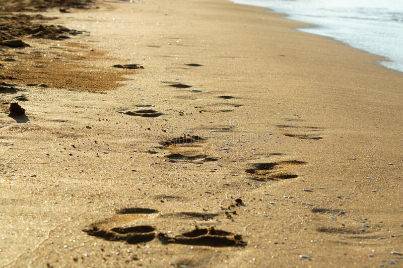 Footprint on sand. Footprint on the beach. Photo ideal to use as poster or wallpaper royalty free stock photo