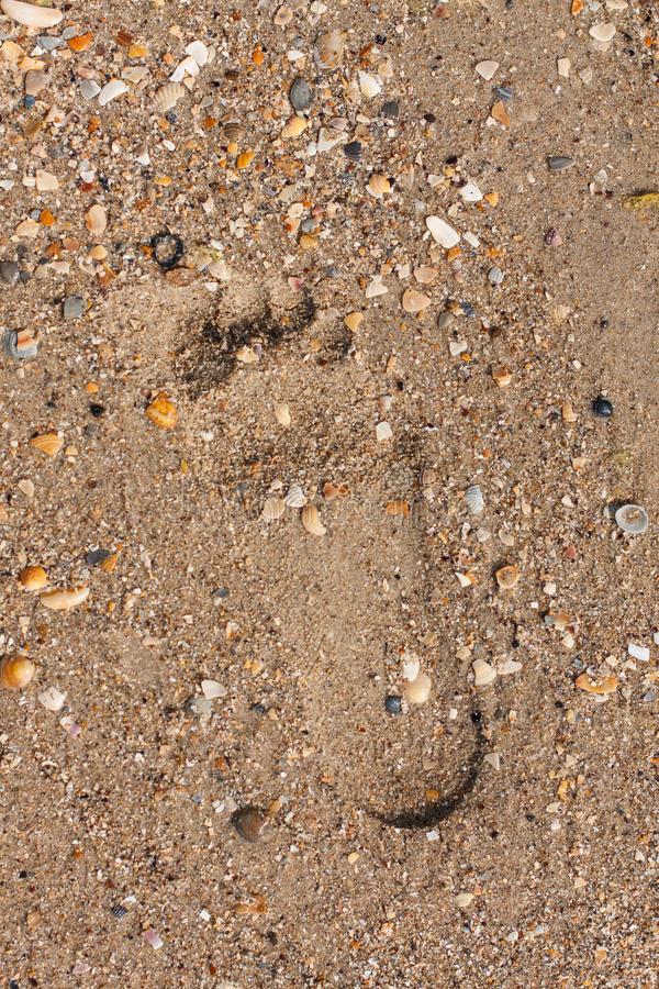 Footprint in the sand. With shells washed by the waves stock images