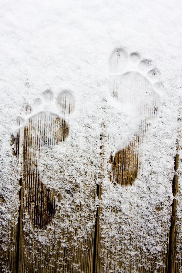 Download Footprint on snow stock photo. Image of snowlike, gelid - 4912712