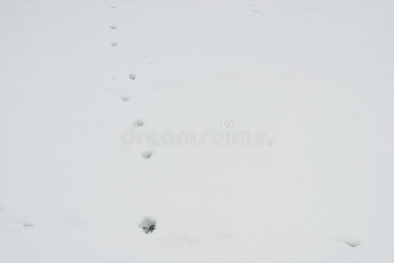 Download Footprint In The Snow. Animal Footprints In The -winter Background Stock Photo - Image: 83711840