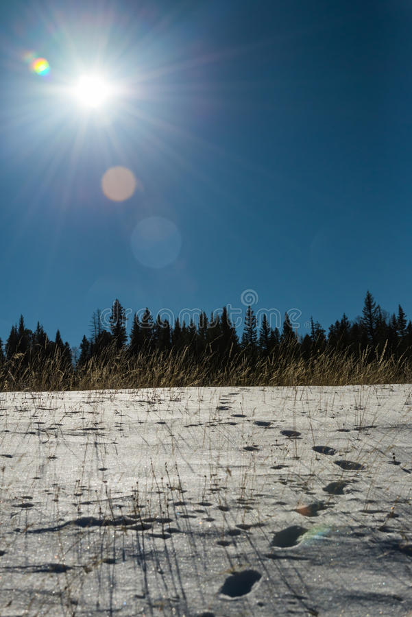 Footprint on snow and blue sky with Sun flare. 1 stock photo