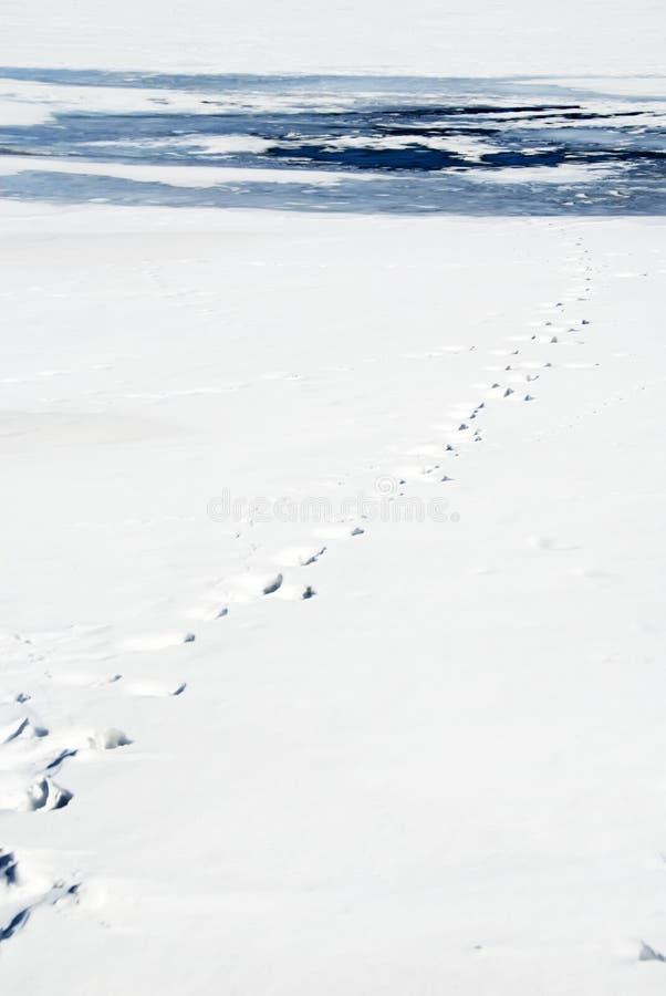 Free Footprint To Thin Ice-2 Royalty Free Stock Photos - 2077048