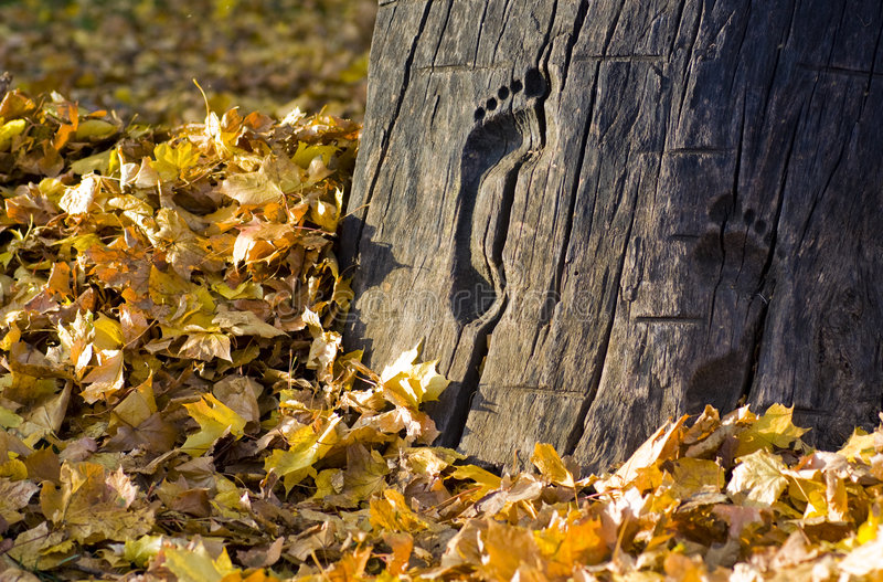 Footprint in the trunk. A footprint in the trunk with leaves stock image