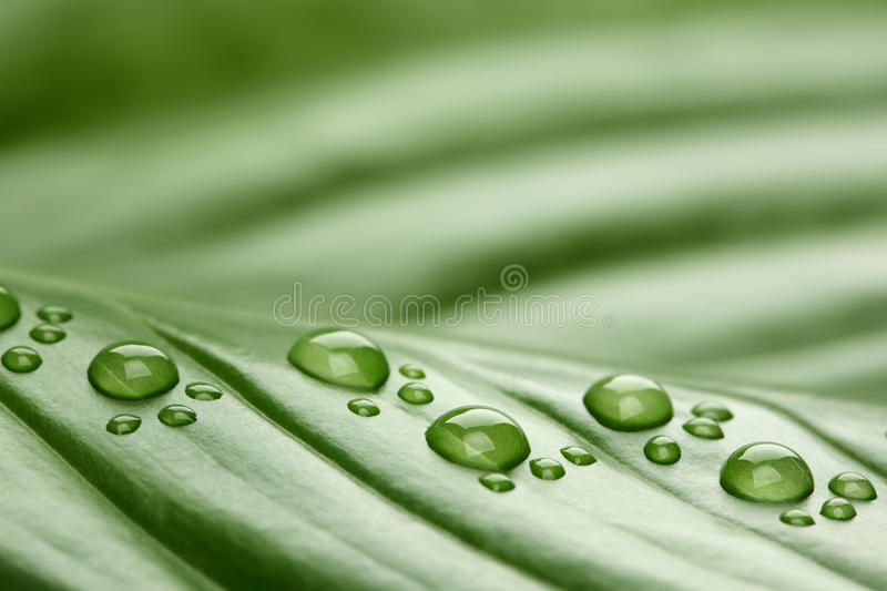 Footprint Water Drops On Leaf Royalty Free Stock Images