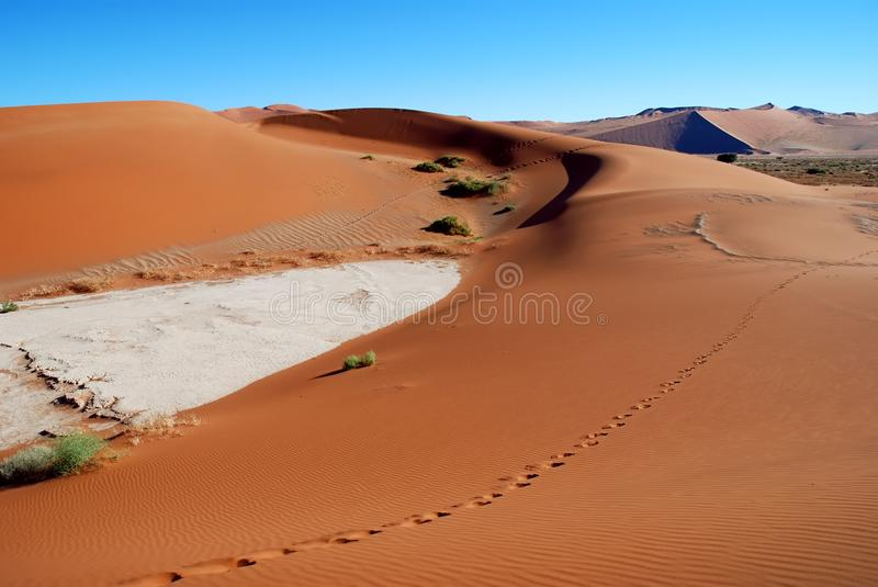 Footprints. Through the red dunes in the namib desert near Sossusvlei in Namibia stock photography