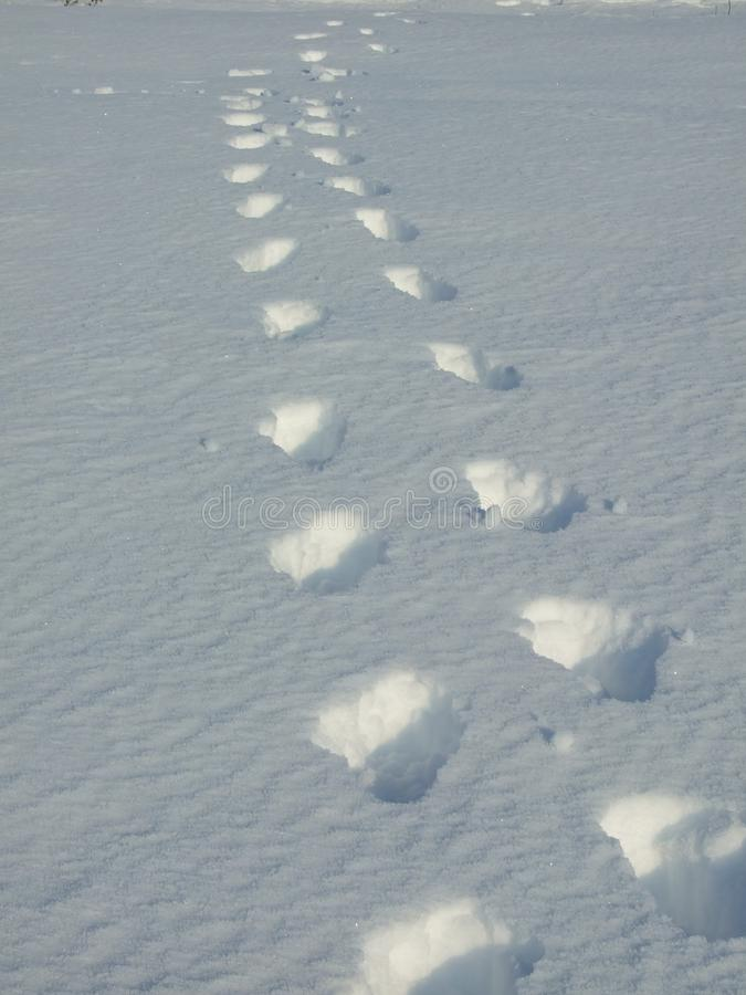 Download Footprints stock image. Image of help, exploration, love - 28572045