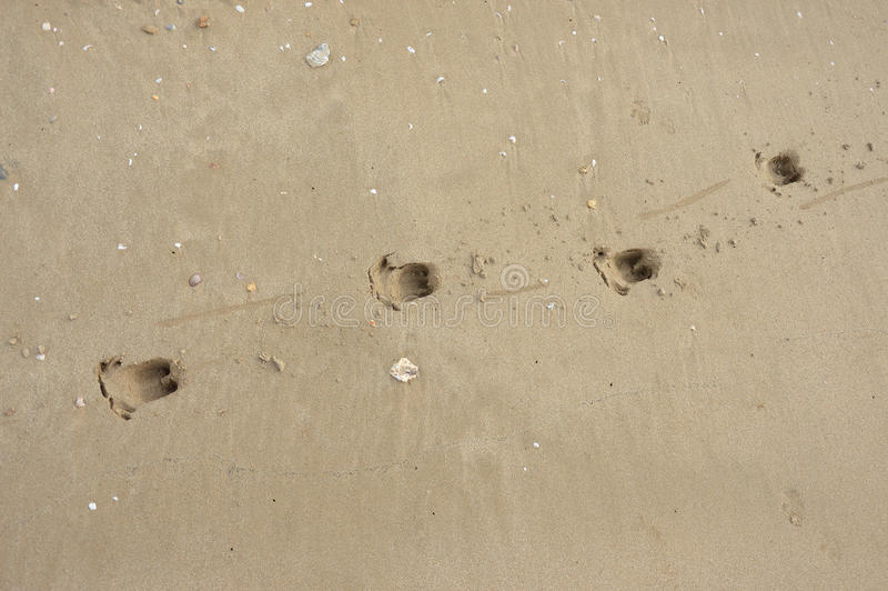 footprints photographie stock