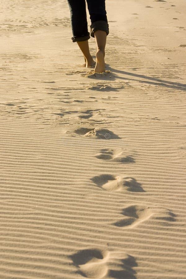 Footprints on the beach. Feet and footprints on a sandy beach royalty free stock photo
